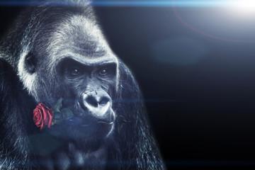 Gorilla mit einer Rose im Mund
