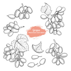Hand drawn grape collection sketch style. Natural vegeterian food set.