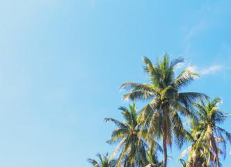 Coco palm tree tropical landscape. Green palm leaf on sunny blue sky photo.