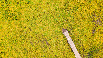 Aerial photos of yellow cosmos flower with walkway