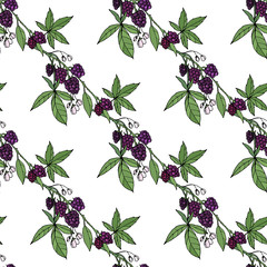 Seamless pattern with floral elements on white. Endless texture with blackberries