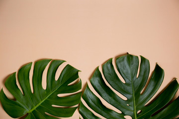 Fashionable Monstera leaves decorated over creative nude beige pastel  background.