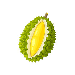 Summer tropical fruits for healthy lifestyle. Durian fruit. Vector illustration cartoon flat icon isolated on white.