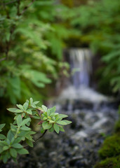 Small cascade surrounded by greenery