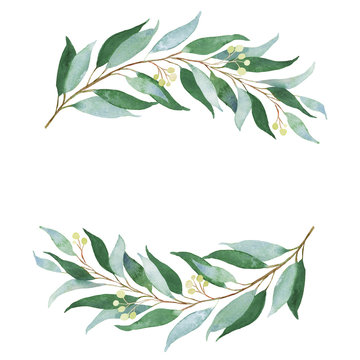 Wedding green twig. Watercolor illustration.