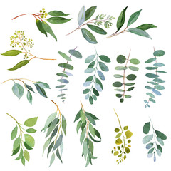 Wedding greenery twigs. Watercolor illustrations