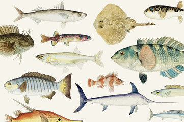 Colored illustration of fish drawing collection