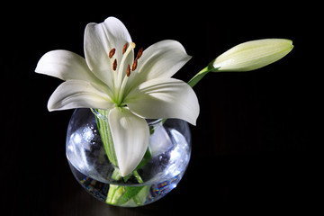 White lily in a glass vase