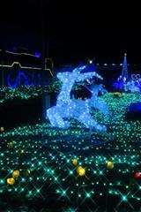 イルミネーション 光の祭典