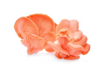 pink oyster mushroom isolated on white background
