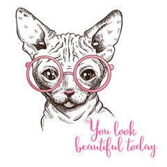 Hand drawn illustration of a sphynx cat in a glasses.