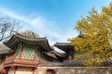 Spring at Changdeokgung Palace, Seoul, South Korea