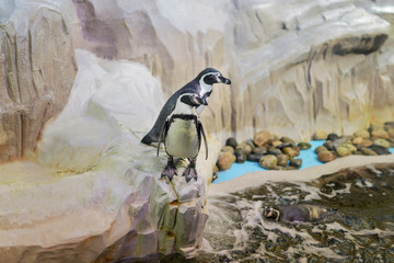 penguin animal zoo