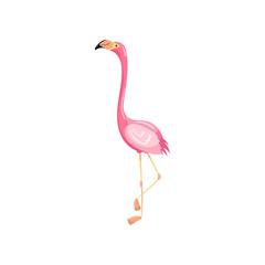 Pink flamingo, exotic tropical bird vector Illustration