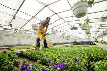 A gardener in overall watering flowers in hothouse with hose and sprinkler