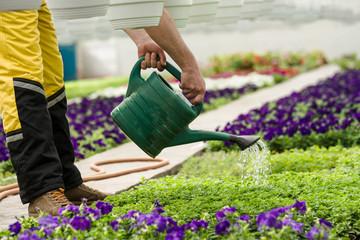 Greenhouse Plants Watering