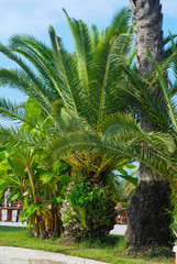 Green Beautiful Palm Trees Ion Green Background. Holliday and Vacation Concept.