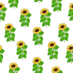 Seamless pattern of sunflower vector with green leaves on white background