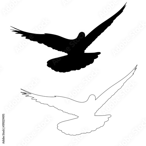 vector isolated silhouette of a flying dove