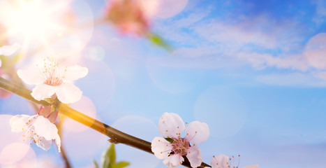Fototapete - Spring flower background; happy Easter landscape