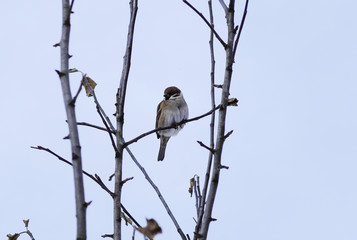 a small Forest bird sitting on a branch