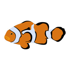 """Isolated colorful """"Orange Clownfish"""" (or Percula Clownfish, Amphiprion Percula) cartoon - Eps10 vector graphics and illustration"""