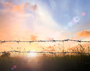 International migrants day concept: Barbed wire is boundary of freedom