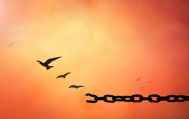 International human rights day concept: Silhouette of bird flying and broken chains