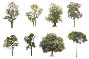 Set of Tree isolated on white background.