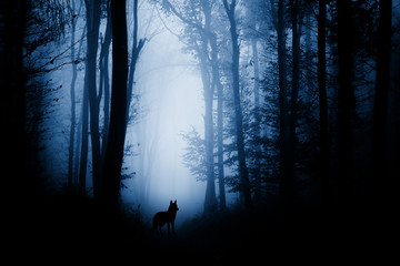Acrylic Prints Wolf wolf silhouette in dark fantasy forest