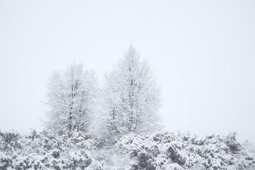 Rural Winter Snow