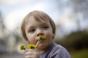 Close-up of little boy holding dandelion flowers