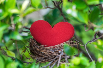 red heart in bird nest