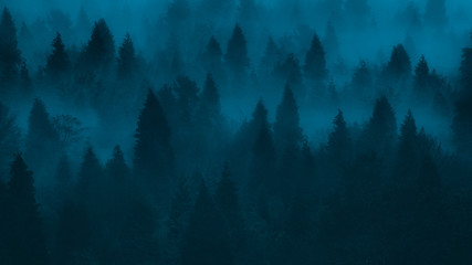 background of dark forest with pines and fog