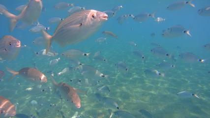 Fische auf Kos
