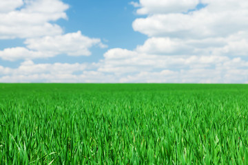 Green grass field and blue sky