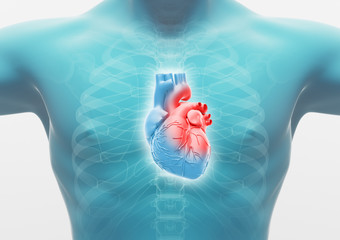 Torace di uomo con cuore, anatomia render 3d