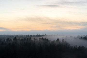 Fog over the forest. Front view from the height