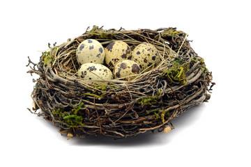 nest of quail eggs on white isolated background