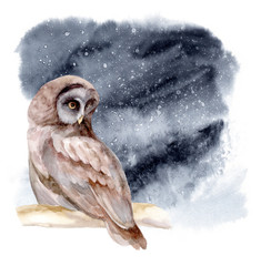 Watercolor illustration. The owl sits on a branch of tree. Night forest landscape.