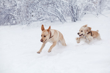 Dogs Playing in Snow. Winter dog walk in the park