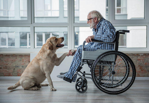 Peaceful old man looking at his hound and holding the paw of it. Tranquil man is sitting in wheelchair and wearing eyeglasses. Hound is sitting near the chair