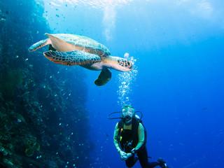 Diver meets turtle
