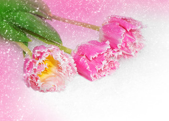 Spring flowers for Valentine day