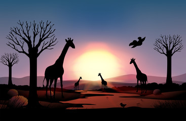 Background scene with silhouette giraffe in the field