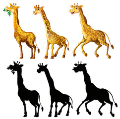 Giraffe and its silhouette in three actions