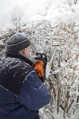 Cutting Shrubs In Winter