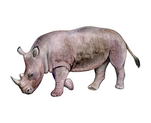 Rhinoceros, Rhino isolated on white background. Watercolor. Illustration. Template. Clipart. Handmade