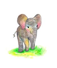 Elephant, a little elephant. Watercolor illustration.