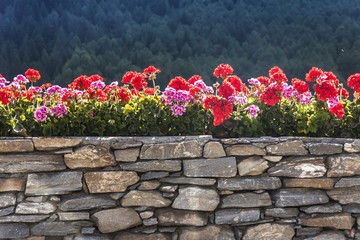 geranium on a stone wall